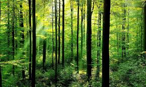 Answers for Plans to protect the forests of Europe - IELTS