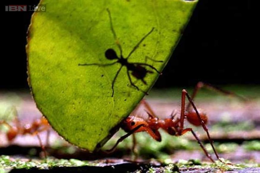 Answers for Ants Could Teach Ants - IELTS reading practice test